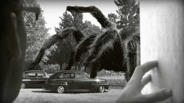 giant-spider01_757_426_81_s